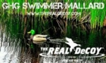 THE REAL DeCOY® Swimmer GHG Mallard Drake - TRDMDSWGHG