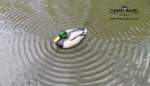 The REAL DeCOY® Super Flutter DOA Mallard Drake - TRDMDSFLDOA